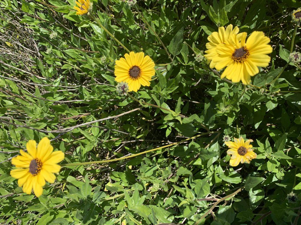 Spring pollen